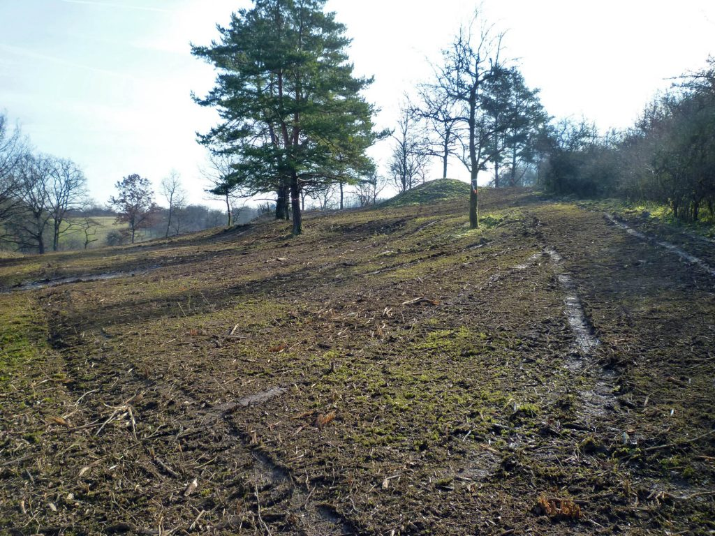 "Spaziergang ""Waldweide"" - Vorbereitung"