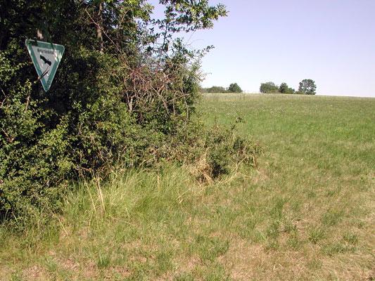 Naturdenkmal in unmittelbarer Nachbarschaft zum geplanten Baugebiet